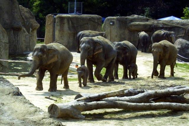 foto: olifanten in de Kölner Zoo